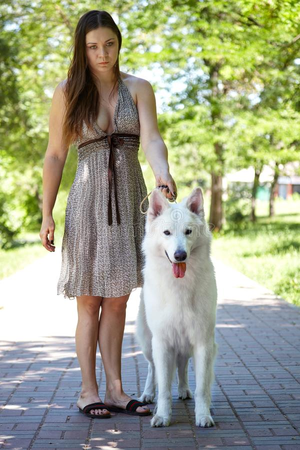 Young attractive caucasian woman with expressive dog of big swiss shepherd breed in green park. Beautiful female and snowy white d. Og like Ghost. Outdoors, copy stock photo
