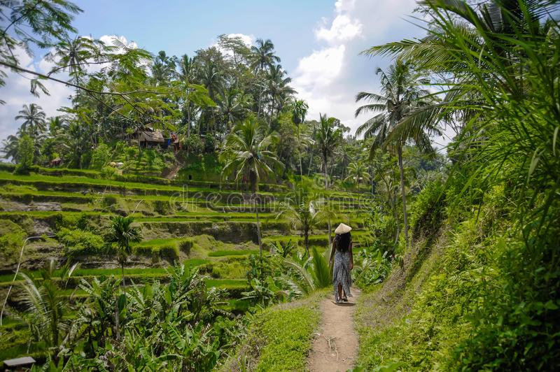 Young attractive happy afro american black woman 30s exploring rice fields forest and jungle in Bali wearing asian hat. Young attractive happy afro american stock image