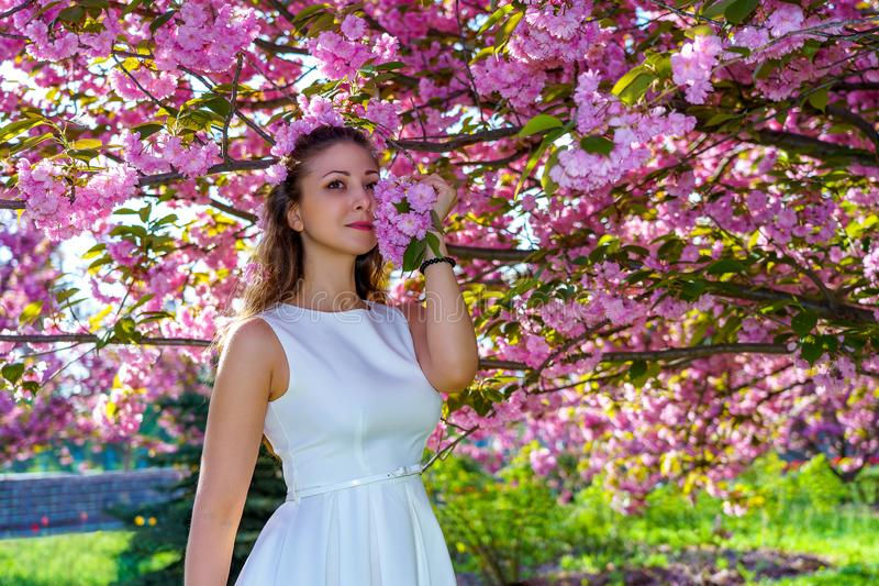 Young attractive woman with pink flowers in her hair in white dress poses tender in blossom sakura tree in the park in spring royalty free stock images