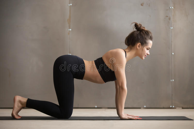 Young attractive woman standing in Bitilasana pose, grey studio. Young attractive woman in black practicing yoga, standing in asana paired with Cat Pose on the royalty free stock photo