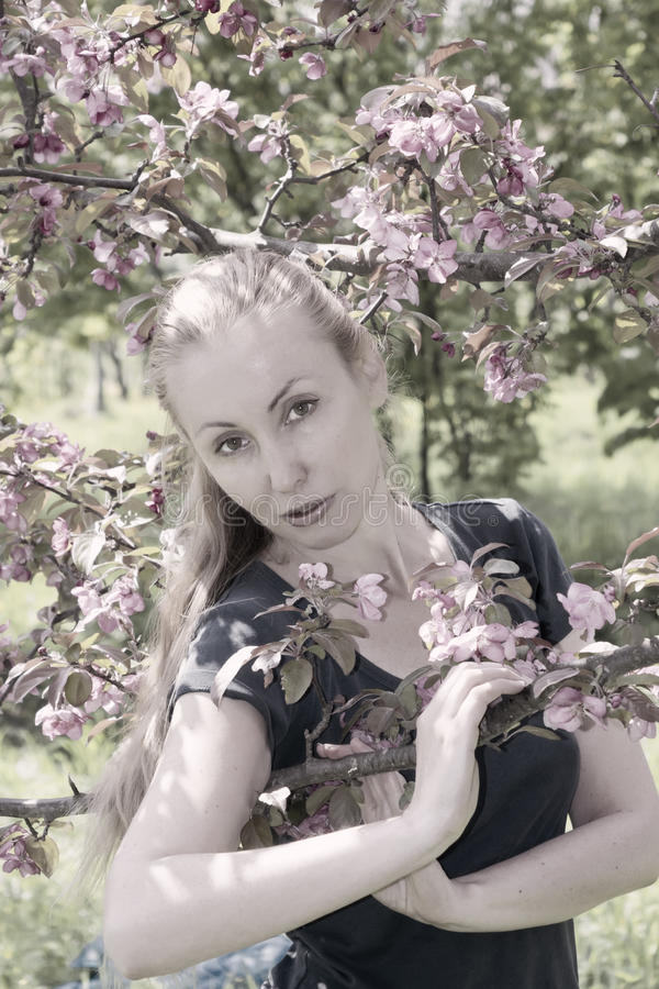 Young attractive woman standing near the blossoming crimson apple tree, toning stock image