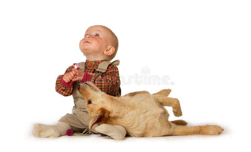 Young baby playing with a dog royalty free stock images