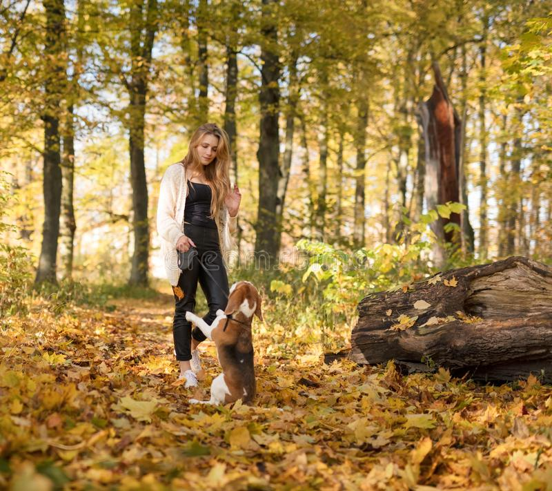 Young beautiful blonde walking with dog in the autumn park. stock photo