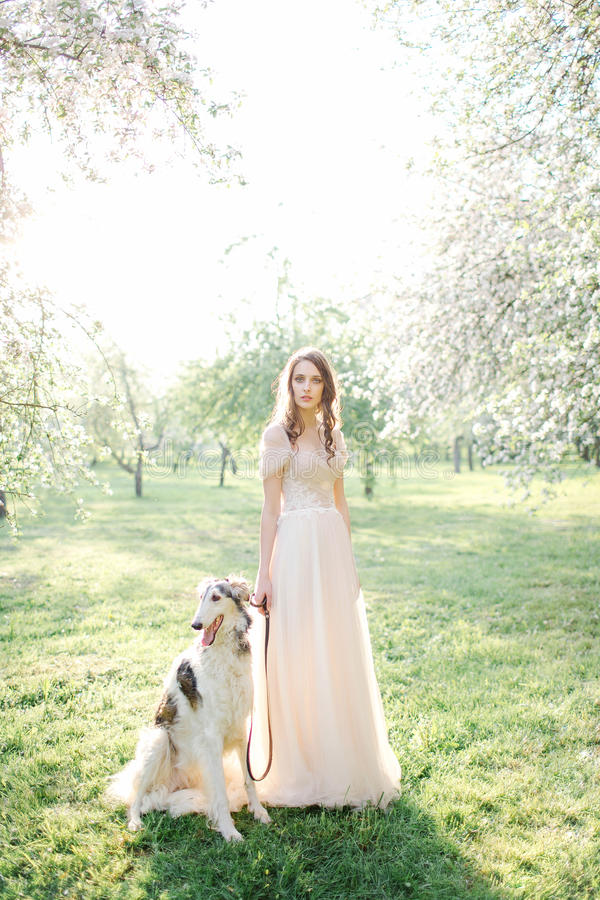 Young beautiful bride in wedding dress with greyhound outdoors stock photos
