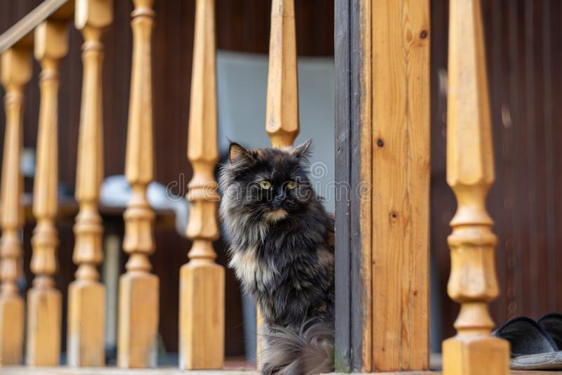 Young beautiful cat gazes into the distance. Selective focus.  stock images