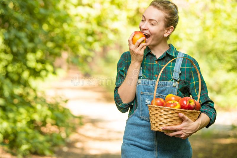 Young beautiful farm girl biting a fresh apple. The concept of summer or autumn harvest. With empty space for writing stock photography