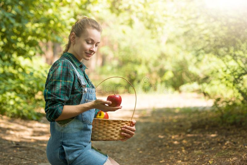 Young beautiful farm girl is harvesting apples. The concept of summer or autumn harvest. With empty space for writing.  royalty free stock images