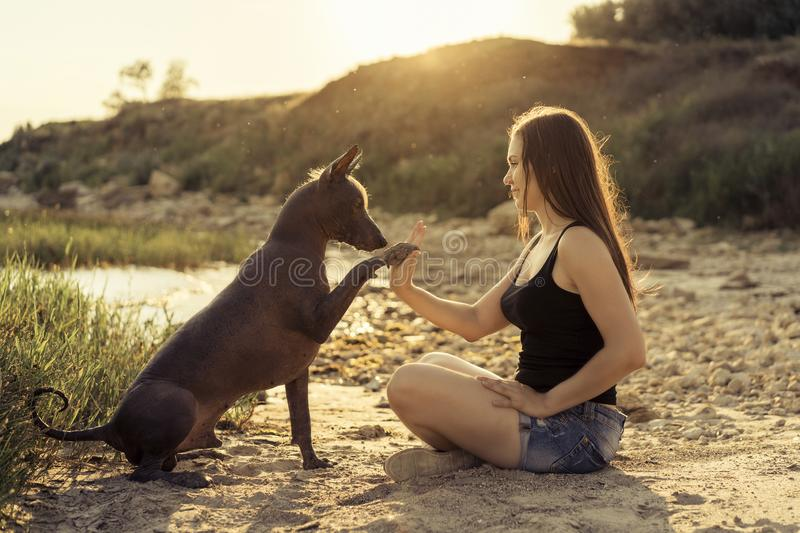 Young beautiful girl playing with a dog, giving paw, on a sandy beach at sunset stock image