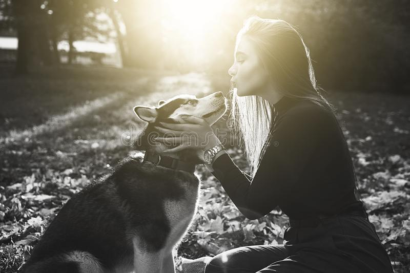 Young beautiful girl playing with her cute husky dog pet in autumn park covered with fallen leaves in black and white. Young beautiful girl playing with her cute stock photos