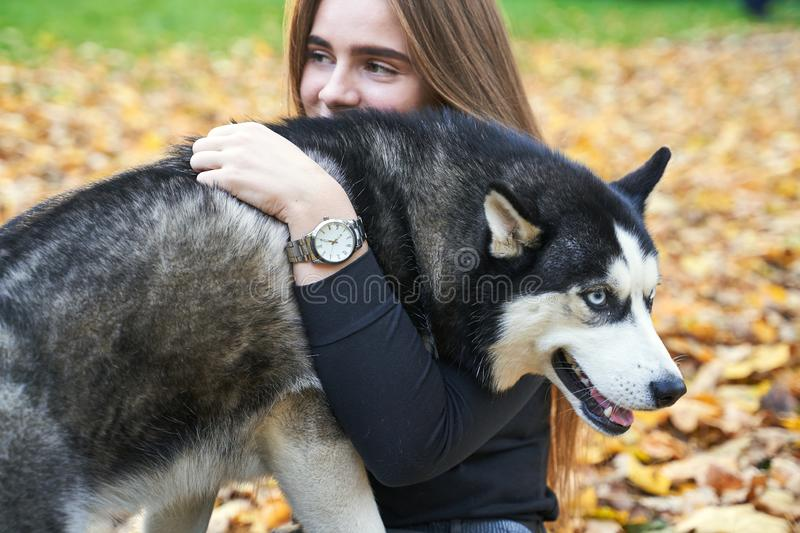 Young beautiful girl playing with her cute husky dog pet in autumn park covered with red and yellow fallen leaves. Young beautiful girl playing with her cute stock photo