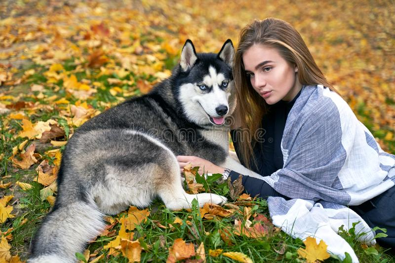 Young beautiful girl playing with her cute husky dog pet in autumn park covered with red and yellow fallen leaves. Young beautiful girl playing with her cute stock photography