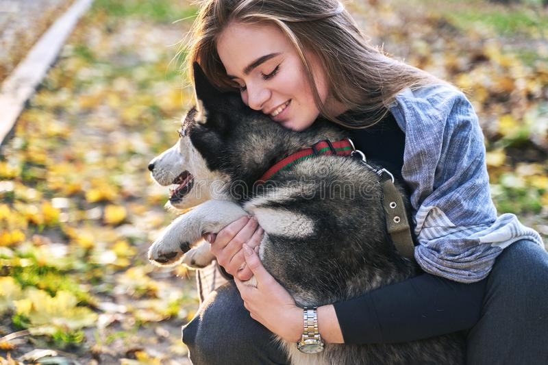 Young beautiful girl playing with her cute husky dog pet in autumn park covered with red and yellow fallen leaves. Young beautiful girl playing with her cute stock image