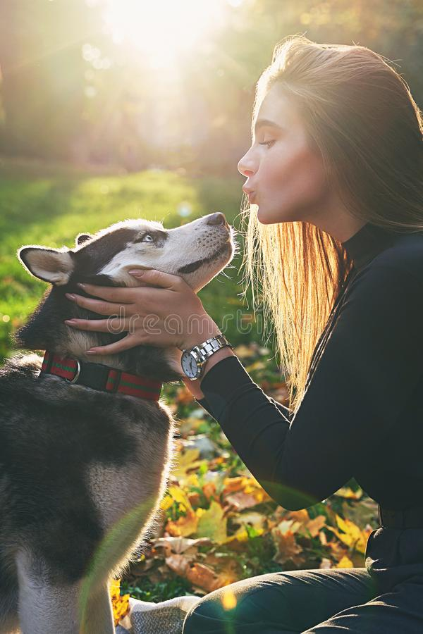 Young beautiful girl playing with her cute husky dog pet in autumn park covered with red and yellow fallen leaves. Young beautiful girl playing with her cute royalty free stock photography