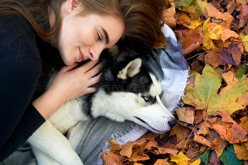 Young beautiful girl playing with her cute husky dog pet in autumn park covered with red and yellow fallen leaves. Young beautiful girl playing with her cute royalty free stock photos