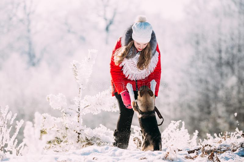 Young Beautiful Pretty Caucasian Girl Woman Dressed In Red Jacket. And White Hat Playing Wiht Puppy Of Mixed Breed Dog In Snowy Forest In Winter Day stock photos