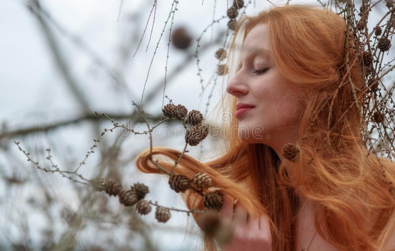 Young beautiful sexy redhead woman plays smiling with pine cones and her beautiful red hair caught in a pine branch. Young beautiful sexy redhead woman plays stock image
