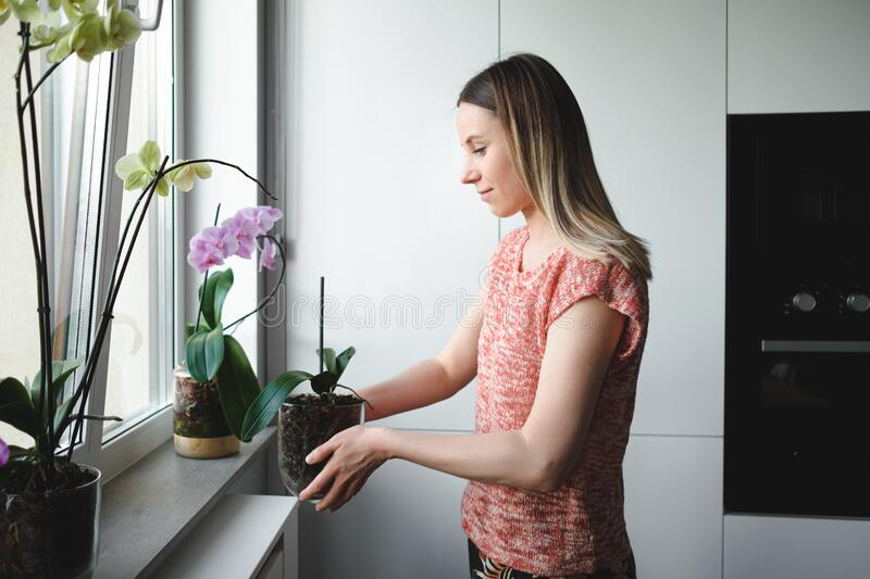 Woman arranging flowers in the house. Young beautiful woman arranging an orchid flower glass pot in the house stock photography