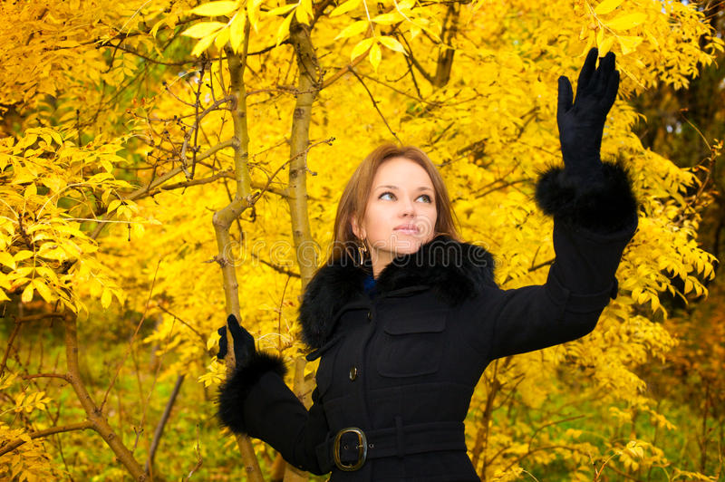 Young beautiful woman in the autumn forest stock photos