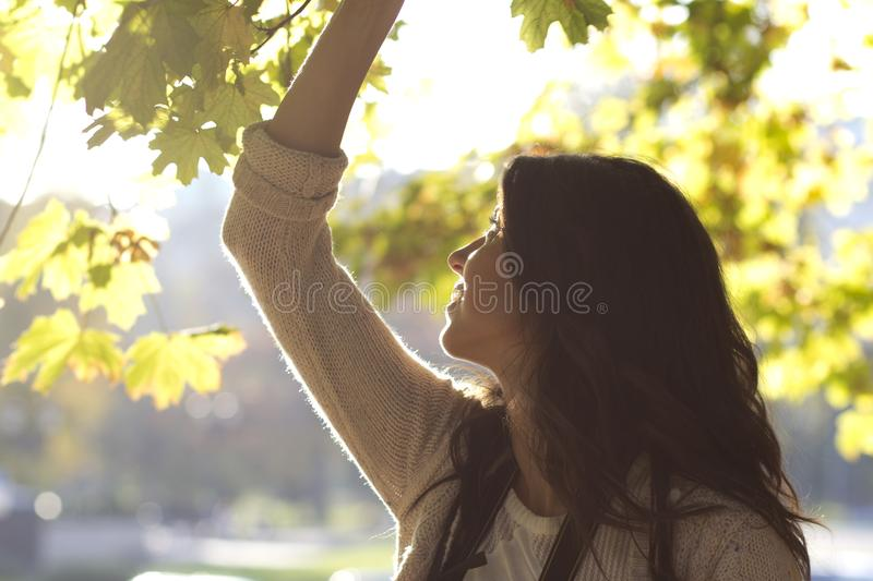 Young beautiful woman on a backlit background. Brunette beautiful woman with curly hair on a backlit sunny background stock images
