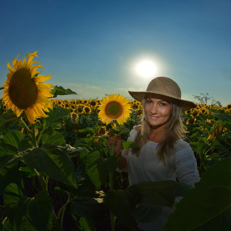 Young beautiful woman on blooming sunflower field in summer stock images