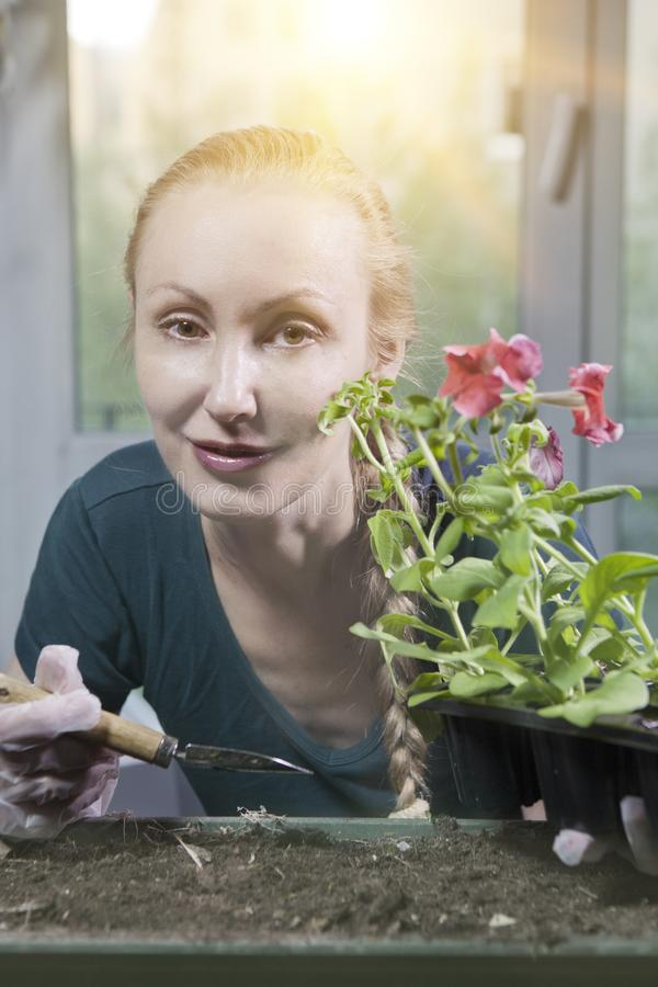 Young beautiful woman with a braid seedling petunia in boxes in the spring stock photography