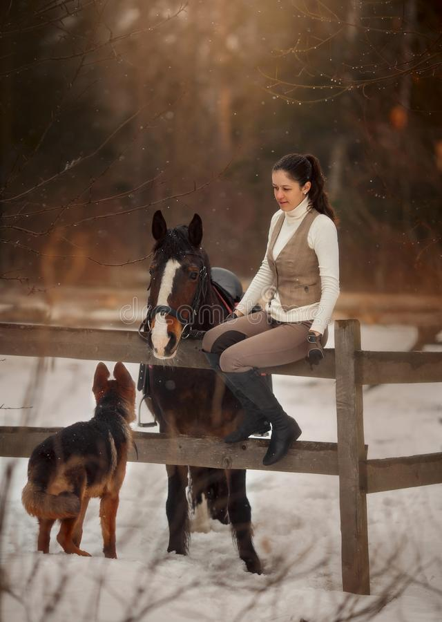 Young beautiful woman with horse and german shepherd dog outdoor portrait stock photo