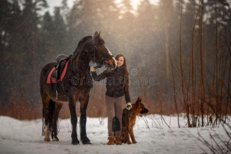 Young beautiful woman with horse and german shepherd dog outdoor portrait stock image