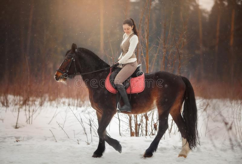 Young beautiful woman with horse outdoor portrait at spring day royalty free stock images