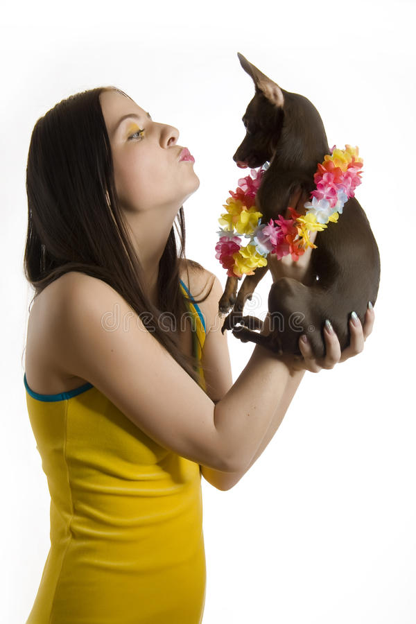 Download Young Beautiful Woman With Little Toy Terrier Dog Stock Image - Image: 12971763