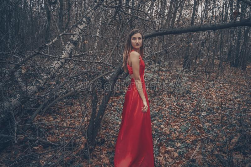 Young beautiful woman in the long red dress is walking along foggy mysterious forest stock photos