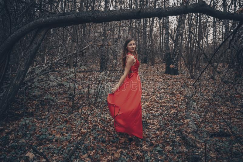 Young beautiful woman in the long red dress is walking along foggy mysterious forest royalty free stock image
