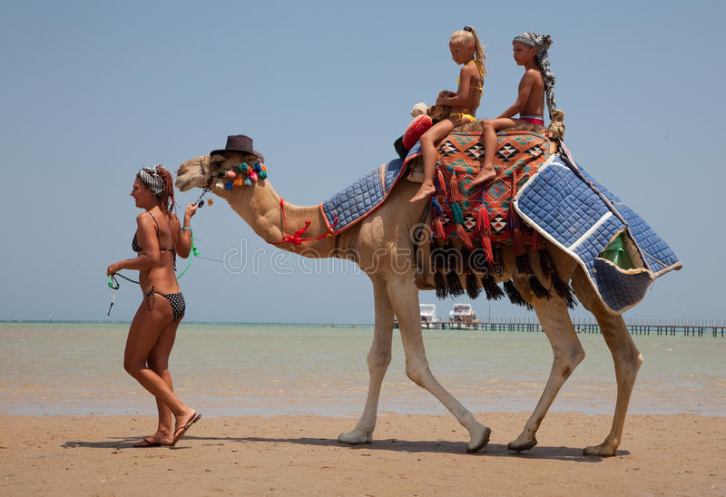 Young beautiful woman rolls the children on a camel stock photo