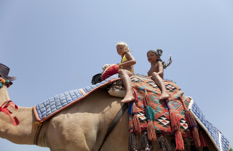 Young beautiful woman rolls the children on a camel stock photos
