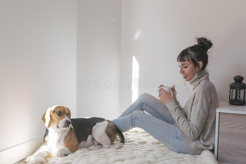 young beautiful woman sitting on a white blanket and holding a cup of coffee. cute beagle dog besides. Relaxing at home. Indoors royalty free stock photos