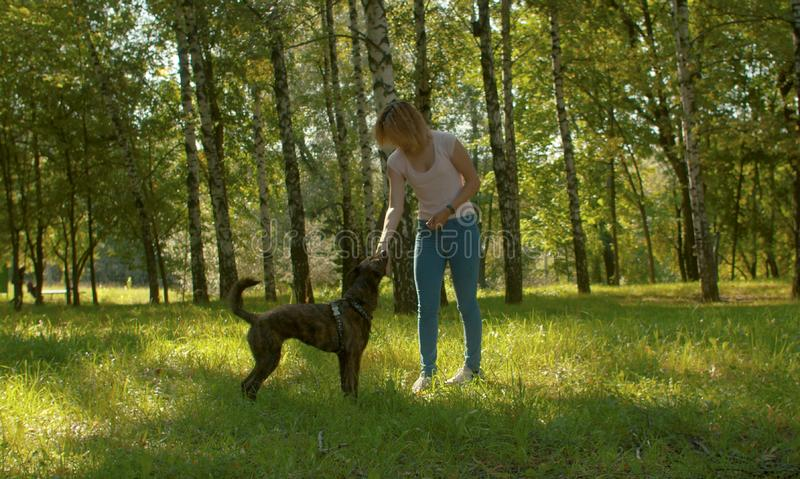 Young beautiful woman stroking her clever dog royalty free stock images