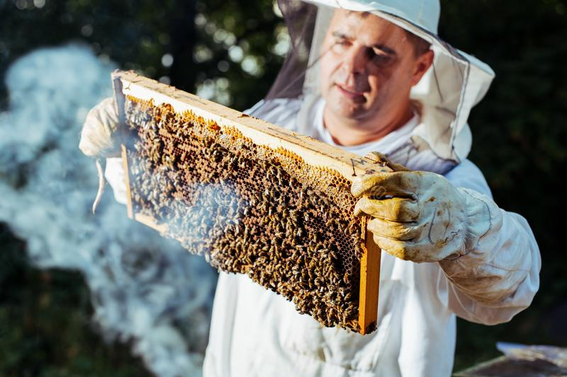 Beekeeper inspecting honeycomb frame at apiary at the summer day. stock images