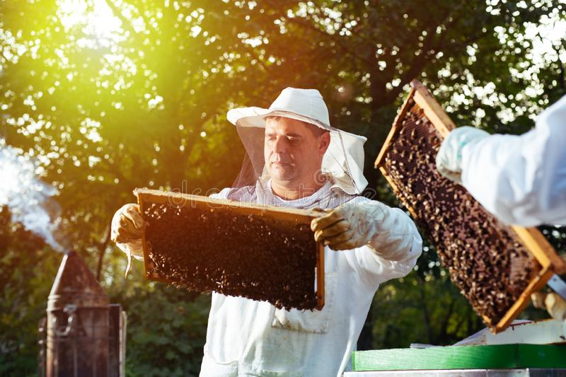 Beekeeper inspecting honeycomb frame at apiary at the summer day. Young Beekeeper inspecting honeycomb frame at apiary at the summer day royalty free stock photos