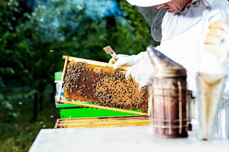 Beekeeper is working with bees and beehives on the apiary. stock photos