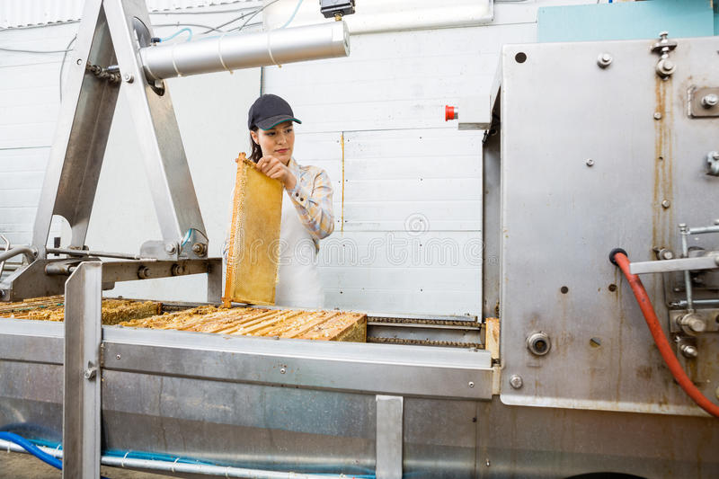 Young Beekeeper Working On Honey Extraction Plant Stock Photo