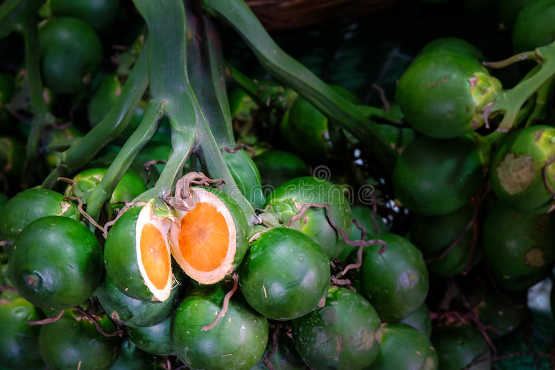 Young betel palm nut royalty free stock image