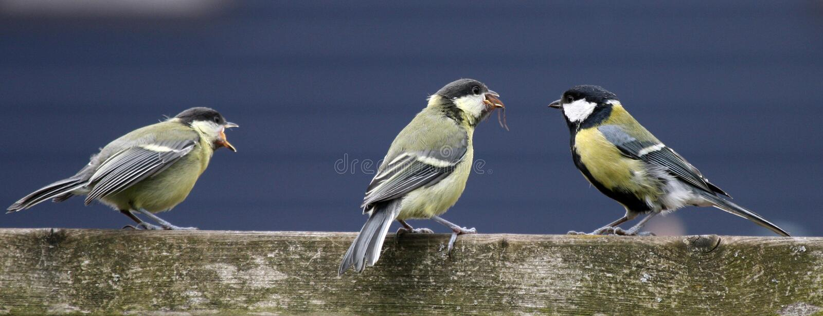Young birds stock image
