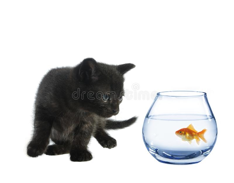 Young black cat and fish stock photography
