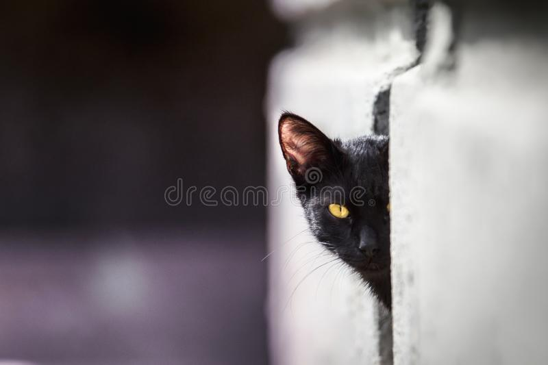 A young black cat with yellow eyes peeking out of the wall royalty free stock images