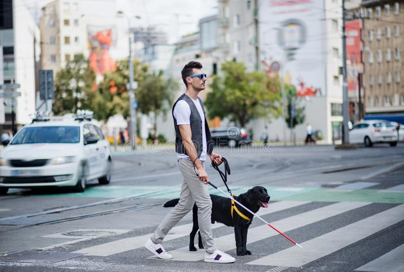 Young blind man with white cane and guide dog walking across street in city. Side view of young blind man with white cane and guide dog walking across street in royalty free stock photo