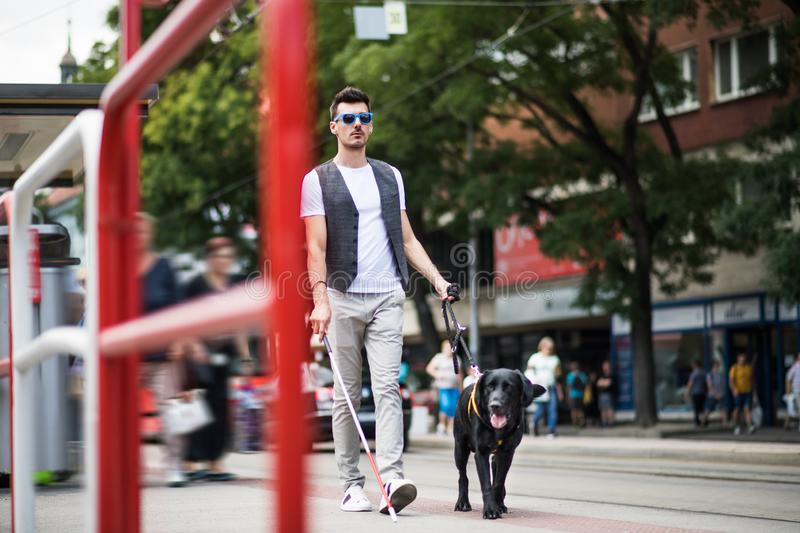 Young blind man with white cane and guide dog walking on pavement in city. A young blind man with white cane and guide dog walking on pavement in city royalty free stock photos