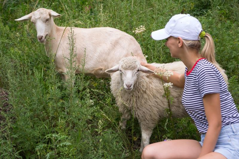 A young blond woman in a white cap, blue denim shorts and a striped T-shirt ironing two white sheep royalty free stock photography