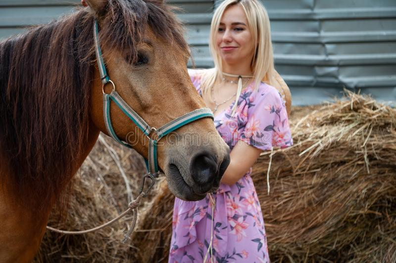 Young blonde girl stroking a horse before a walk that eats hay near the haystack on a summer clear day stock photo