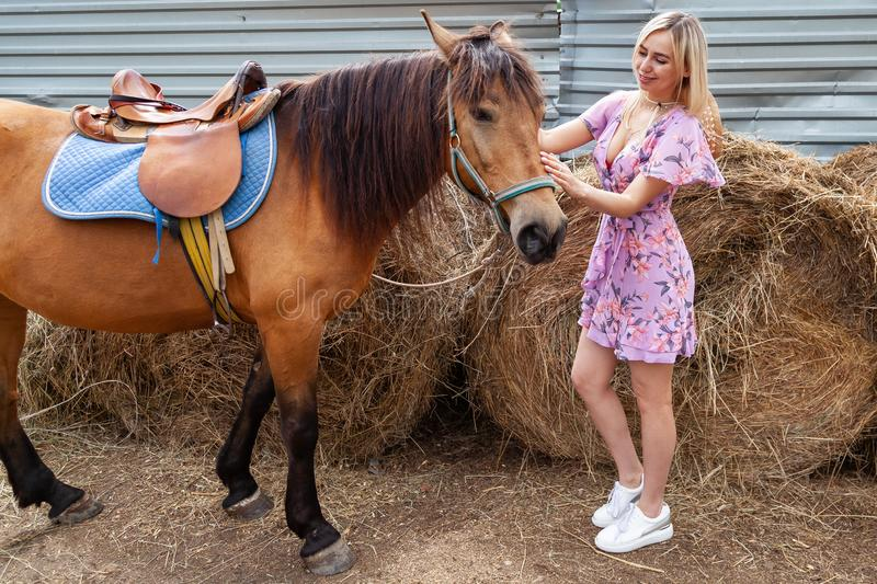 Young blonde woman in dress and white shoes stroking a brown horse before a walk that eats hay near the haystack on a summer stock photos