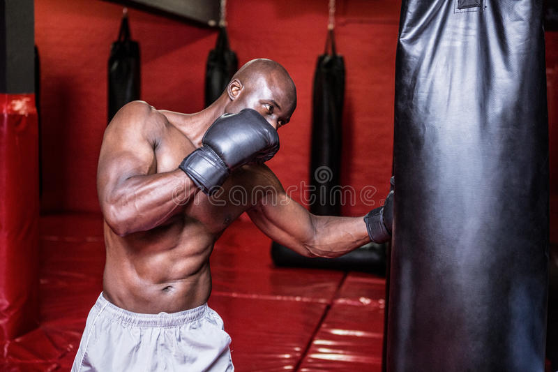 Young Bodybuilder boxing a bag royalty free stock image