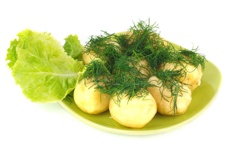 The Young Boiled Potatoes With Lettuce And Dill Royalty Free Stock Images